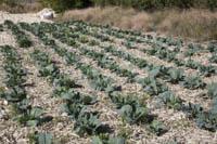 Maintaining soil cover
