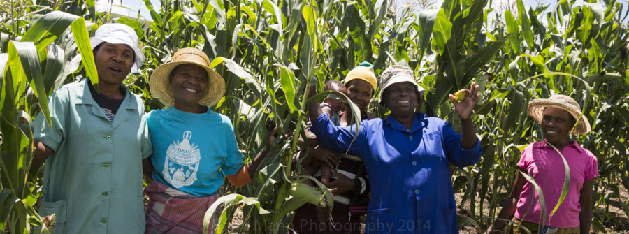 Proud farmers stand next to their maize grown using Conservation Agriculture methods taught by Growing Nations