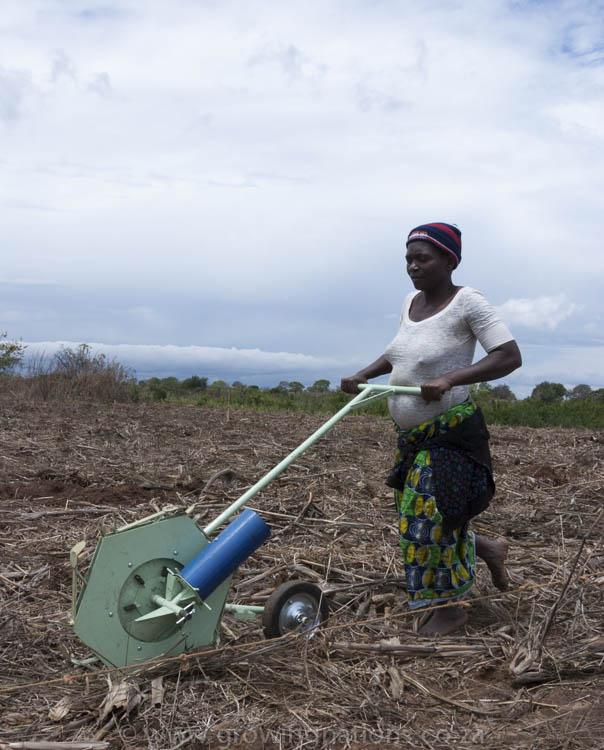 Field Testing Haraka Planter, Mozambique