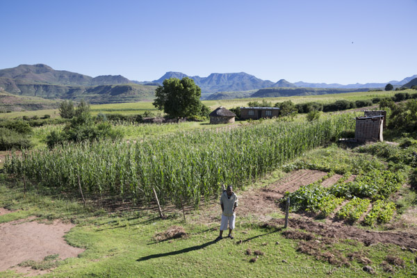Molibeli's fields 2013